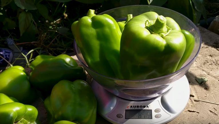 Взвешивание овощей