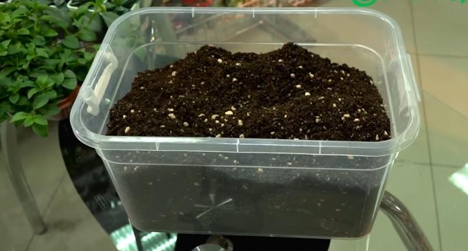 Подготовленная почва для посева