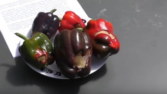 Сухая гниль на плодах перца